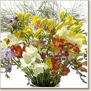 bouquet of freesias FL13