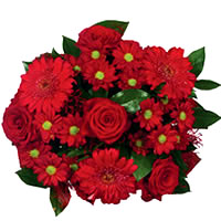 Red Christmas Flowers